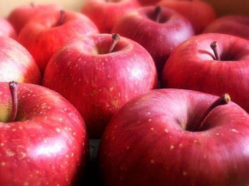 リンゴの素材画像