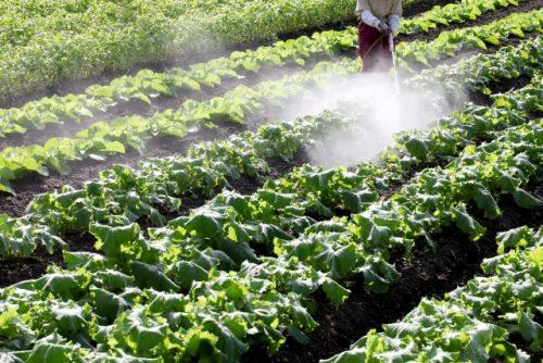 農薬が必要な野菜は非常に多い