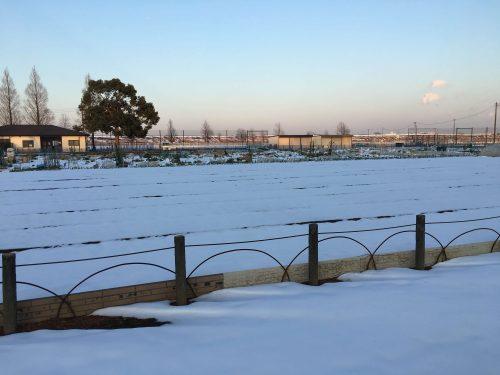 千葉県柏市あけぼの山公園の花畑と風車